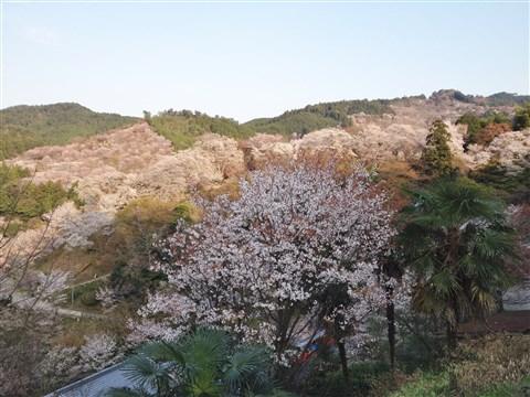 yosino sakura (4)